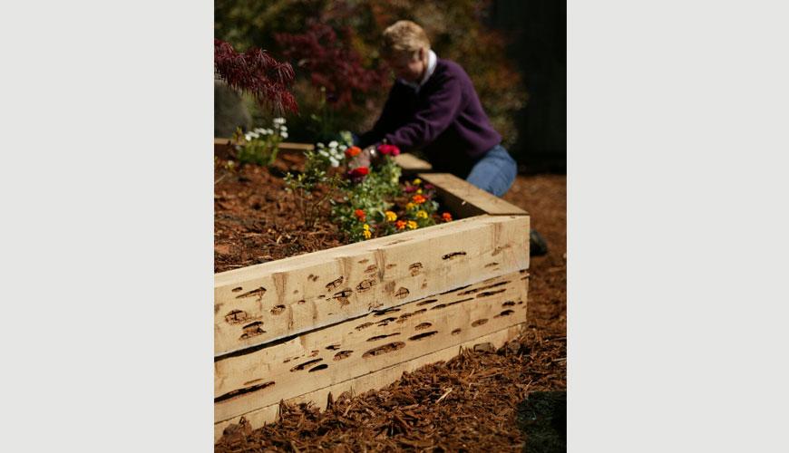 pecky cedar landscape timbers - Pecky Cedar – Rustic Lumber Co